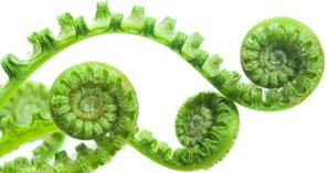 Mag een beetje groen ook?